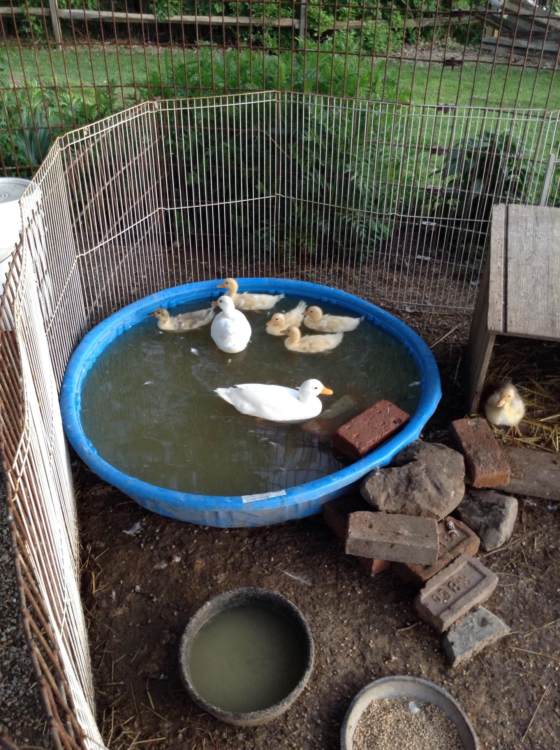 AKA call Ducks , i